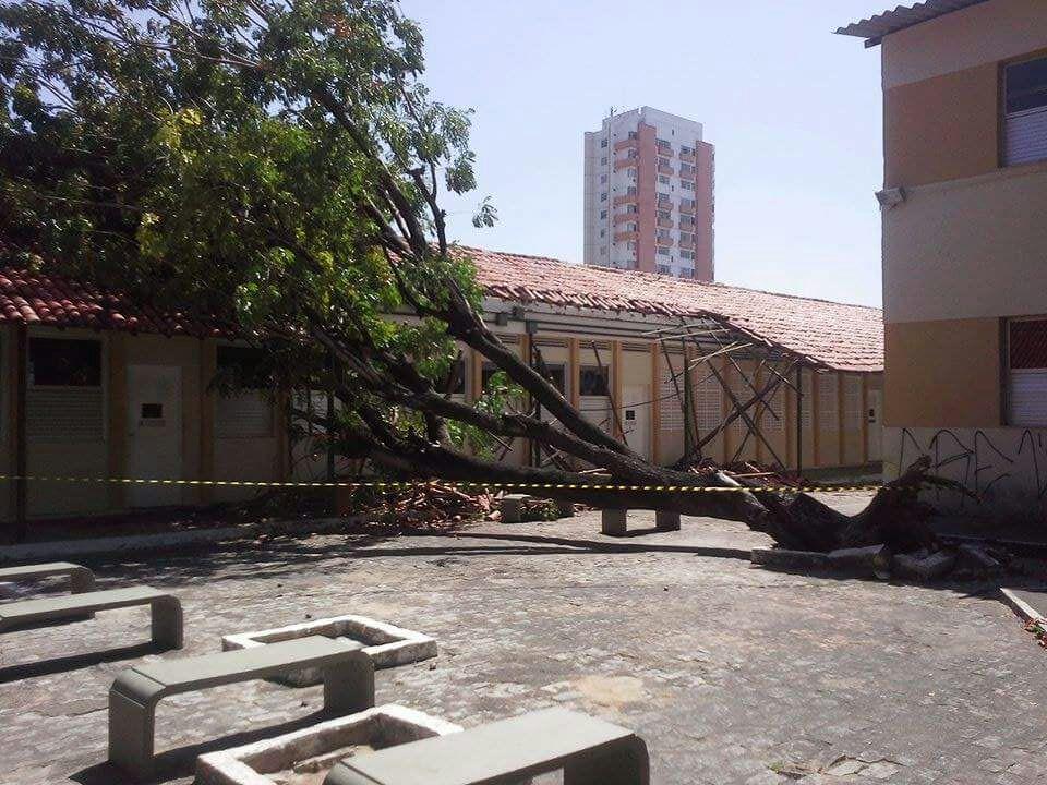 As árvores do local possuem mais de 50 anos, e não recebem manutenção (Foto: Daniel Macêdo)