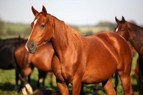 Doença em cavalos não possui curas (FOTO: Reprodução)