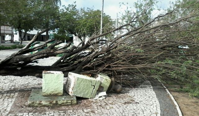 O busto foi destruído após a queda da árvore na praça (FOTO: Divulgação)
