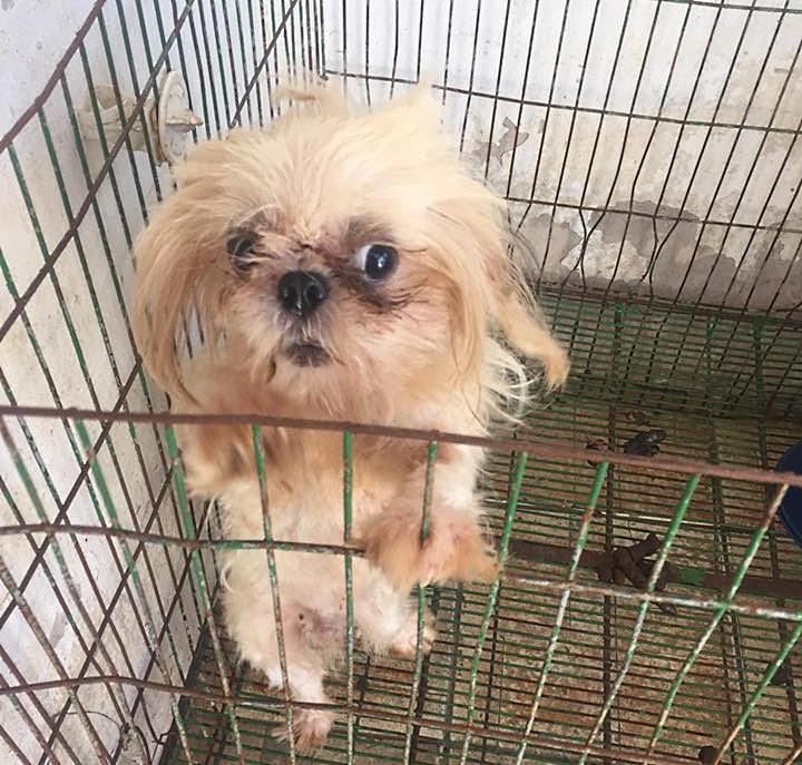 """Abrigo de animais faz """"vaquinha virtual"""" para pagar dívida de R$ 18 mil"""