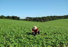 São 7 vagas disponíveis para a área da Agricultura (FOTO: Divulgação)