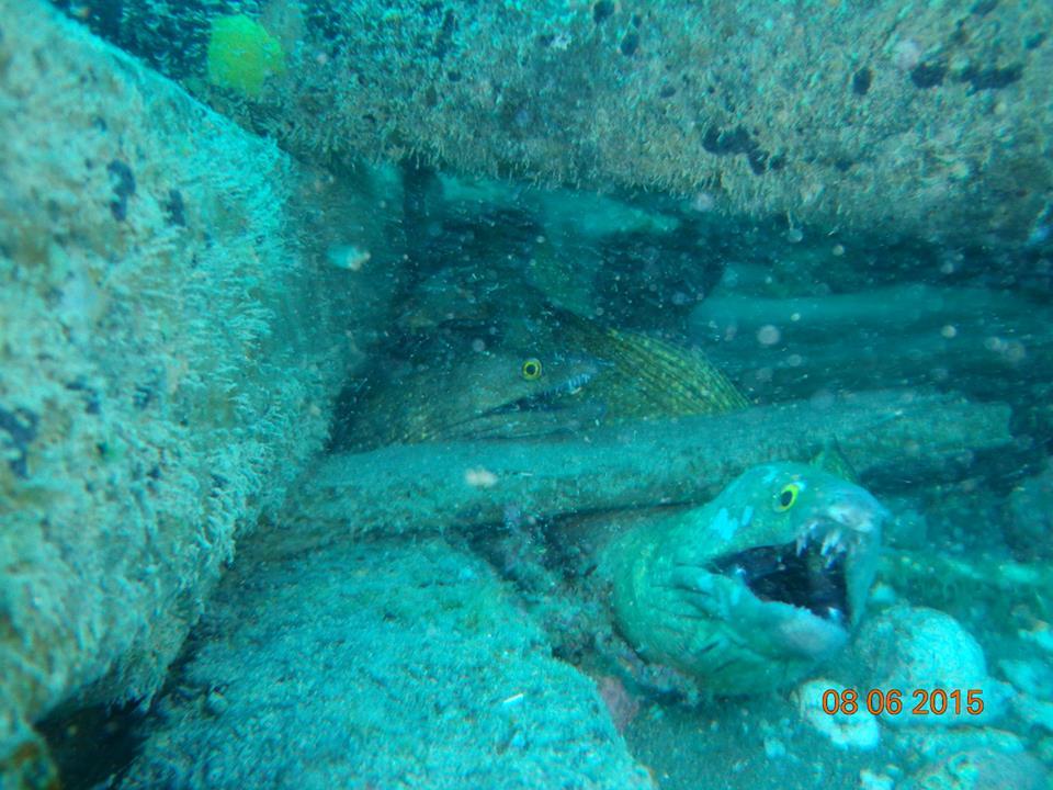 Confira as imagens do Parque Estadual Marinho da Pedra da Risca do Meio (FOTO: Instituto Atlântida/ Reprodução Facebook)