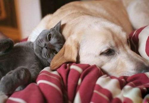 /home/tribu/public html/wp content/uploads/sites/6/2016/02/cachorros e gatos tambem sonham