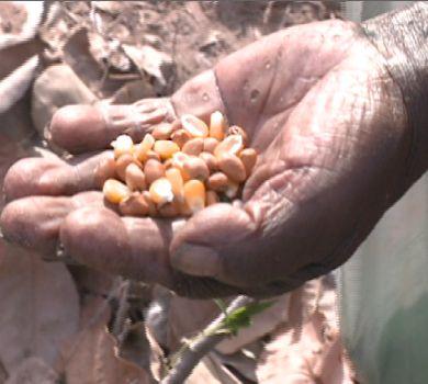 Agricultores começam a plantar com esperança de um ano longe da seca