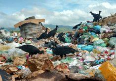 recém-nascidos no lixo: polícia investiga o caso (FOTO: Reprodução TV Jangadeiro)