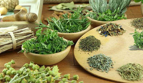 Resultado de imagem para plantas que curam