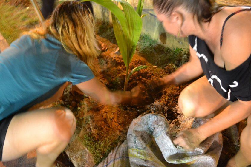 Coletivo Verdejar realizará o plantio (FOTO: Reprodução Facebook)